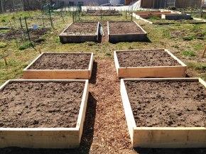 conshohocken-community-garden-boxes