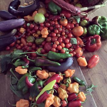 conshohocken-community-garden-donated-to-those-in-need