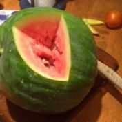 conshohocken-community-garden-watermelon