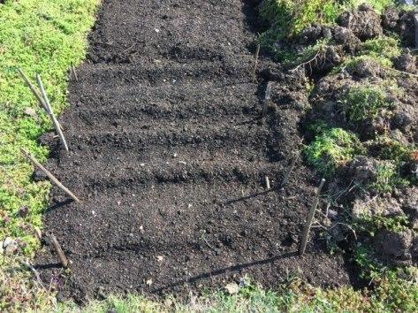 Conshohocken Community Garden Planted 2